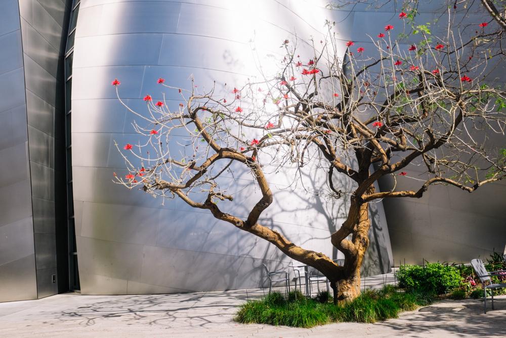 walt disney frank gehry architecture design los angeles california vacation-10
