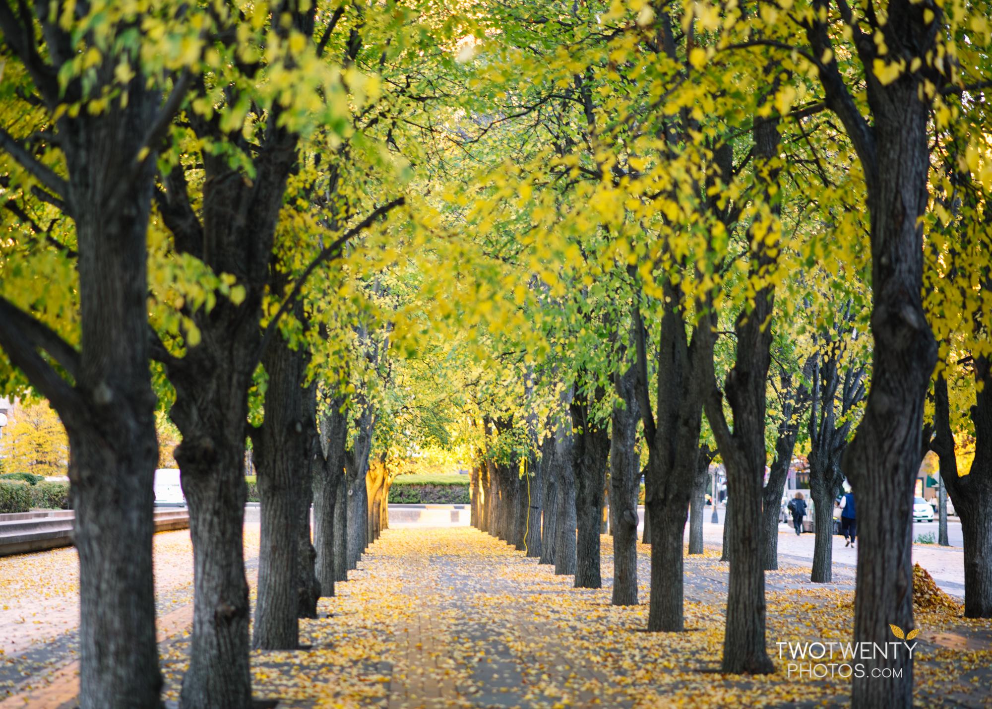 boston-in-the-fall-21